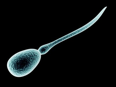 hur många spermier behövs för at man kan bli gravid?